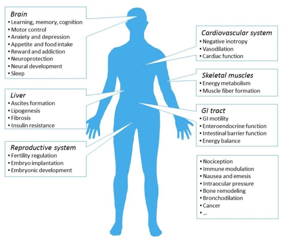 Cannabis, CBD, pain management