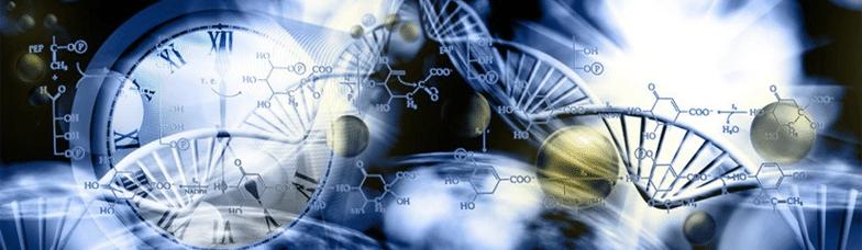 Methylation & Circadian Rhythm